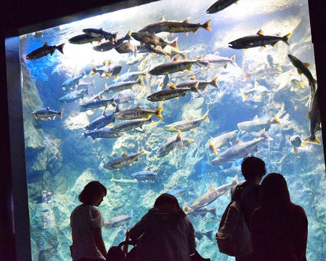 新千歳空港スイーツと淡水魚水族館 千歳サケのふるさと館を散策!