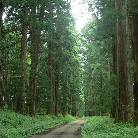 【ギネス認定!世界一長い並木道】日光杉並木街道を歩いてみよう!