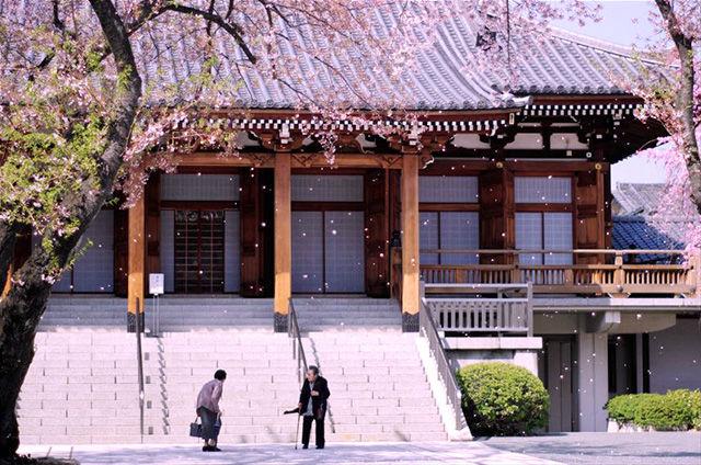 【没後100周年!】小石川後楽園から夏目漱石の永眠の地までを歩く