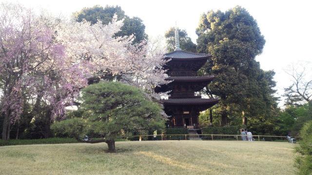 ぷらっと!神田川と椿山荘さんぽを桜とともに