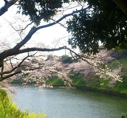 東京駅から春を感じる!皇居周辺・梅めぐりコース