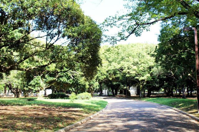 代々木公園・ジョギングコース