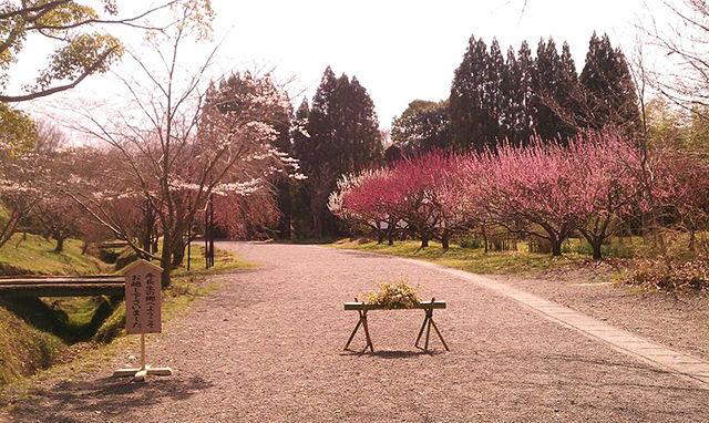 【大津市】琵琶湖から1000本の梅が咲く寿長生の郷まで歩いてみよう!