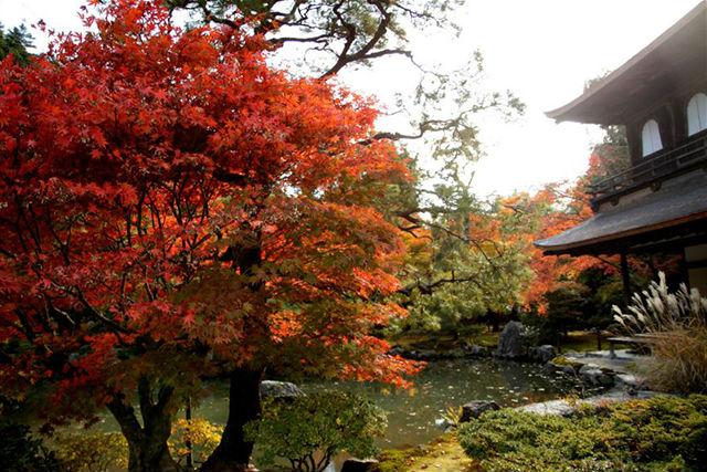 【紅葉名所】哲学の道から銀閣寺までを歩いてみよう!