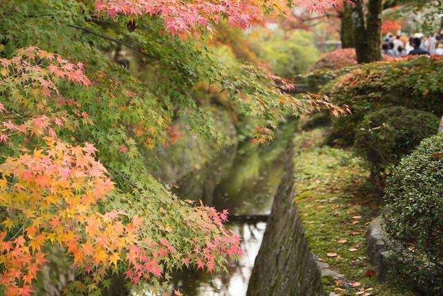 【紅葉名所】永観堂周辺で紅葉を探してみよう!