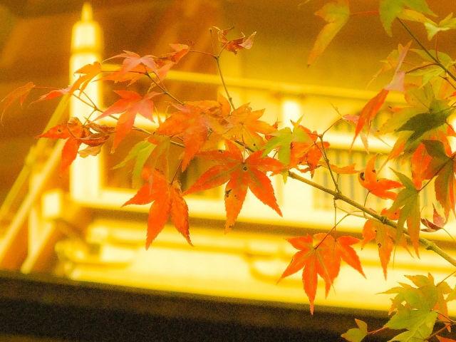 【紅葉名所】金閣寺周辺で紅葉を探してみよう!